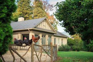 Chickens in front of Glen Gordon