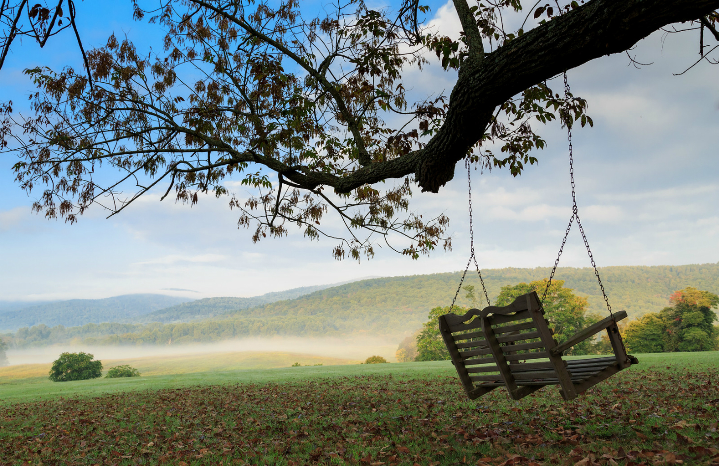 Tree Swing Overlooking the Property at Glen Gordon Manor