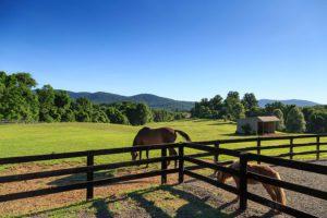 Horses at Glen Gordon Manor